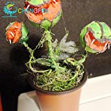 La venta caliente 100pcs Semilla de plantas en maceta insectívora Dionaea gigantes Clip...
