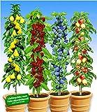 BALDUR-Garten Säulen-Obst-Kollektion Birne, Kirsche, Pflaume & Apfel, 4 Pflanzen als Säule Birnbaum, Kirschbaum, Pflaumenbaum, Apfelbaum