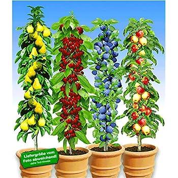 Atemberaubend BALDUR-Garten Säulen-Obst-Kollektion Birne, Kirsche, Pflaume @WG_92