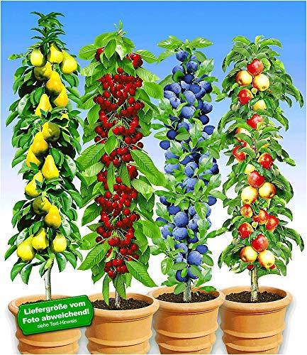 Obstbaum pflanzen in