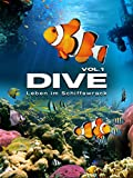 Dive: Leben im Schiffswrack