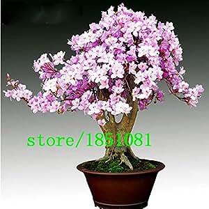 Grande vendita Rare Bonsai 12 varietà di Azalea Semi fai da te Casa & Giardino Piante assomiglia Semi Sakura giapponese Cherry Blossoms Flower