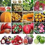 Plantree 50 Stücke Cranberry Samen: Garten Verschiedene Erbstück Gemüse Obst Samen Nicht-GVO Essbare Samen Organische Pflanze