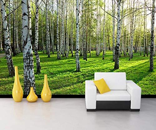 Wphwm Fototapete Tapeten 3D Wandbilder Naturlandschaft Birke Forest Wall Paper Natural Scenery Für Wohnzimmer-Schlafzimmer Sofa Tv Background Wall Paper350x256CM - Birke Wohnzimmer Sofa