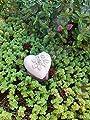 Steinfigur Herz Rosenherz Doppelrose Grabherz Grabschmuck Steinguss Frostfest von steinfiguren-neumann bei Du und dein Garten