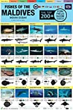 Fishes of the Maldives: Indian Ocean Field Guide