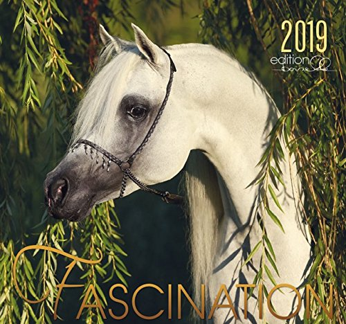 Fascination 2019: Arabische Pferde