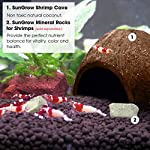 SunGrow Coco Shrimp Cave, 5x3 Inches, Coco Hut, Comfortable Hideout for Crustaceans, Perfect Breeding Area, Promotes… 11
