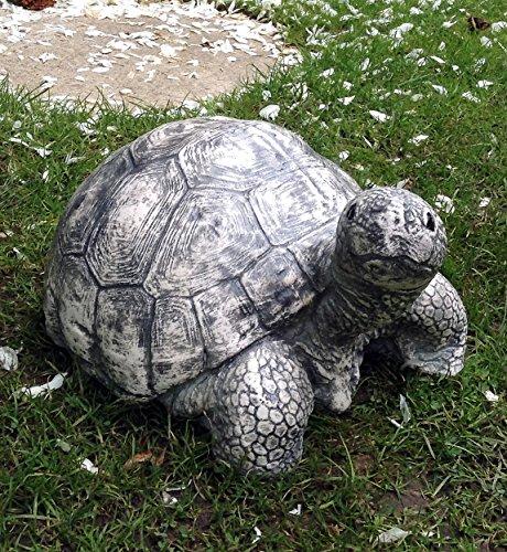 Animaux tortue achat vente de animaux pas cher for Amenagement jardin pour tortue