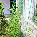 Kingt Ranknetz mit der Maschenweite 10x10 cm Rankhilfe Gartennetz für Kletterpflanzen Gurke Tomaten Erbsen Schwerbeladen von Kingt bei Du und dein Garten