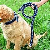 Mittlere Und Große Hundekette Jinmao Labrador Husky Startseil Hundeleine Halsband Heimtierbedarf (Farbe : Blue-2, größe : S)