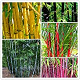 #6: Bamboo Combo Pack - All In One Pack Bamboo Seeds Garden Pack By Creative Farmer