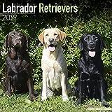 Kalender 2019 Labrador Retriever (Mixed) mit Weihnachtskarte