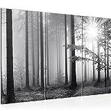 Bilder Wald Schwarz Grau Wandbild 120 x 80 cm - 3 Teilig Vlies - Leinwand Bild XXL Format Wandbilder Wohnzimmer Wohnung Deko Kunstdrucke Grau -100% MADE IN GERMANY - Fertig zum Aufhängen 007831a