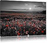 tolles Mohnblütenfeld schwarz/weiß Format: 80x60 auf Leinwand, XXL riesige Bilder fertig gerahmt mit Keilrahmen, Kunstdruck auf Wandbild mit Rahmen, günstiger als Gemälde oder Ölbild, kein Poster oder Plakat