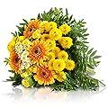 MIFLORA Blumenstrauß Sonnentraum | Entworfen von der Europameisterin von MIFLORA bei Du und dein Garten