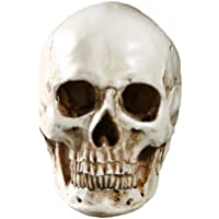 Imported Lifesize Realistic 1:1 White Human Skull Replica Resin Model Medical Prop