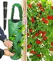 BALDUR-Garten Hänge-Erdbeere® 'Hummi®' 3 Pflanzen & Pflanzbeutel 'Kaskade'& Gießtrichter,1 Set von Baldur-Garten - Du und dein Garten