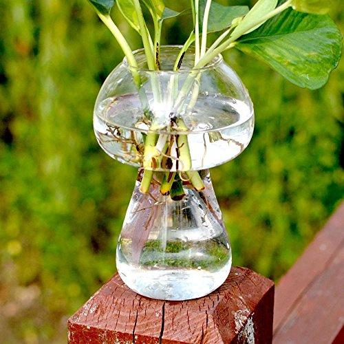 LISRUI Jardineras Creativas Plantas hidropónicas
