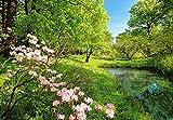 Papier peint photo–Jardin au printemps–(136I) Taille 366x 254cm 8pièces–Fleurs Prairie Forêt soleil arbres Paysage Nature Papier peint Motif peint poster image de Salon Chambre Cuisine Wall Mural