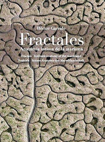 Fractales: Anatomía íntima de la marisma por Héctor Garrido Guil
