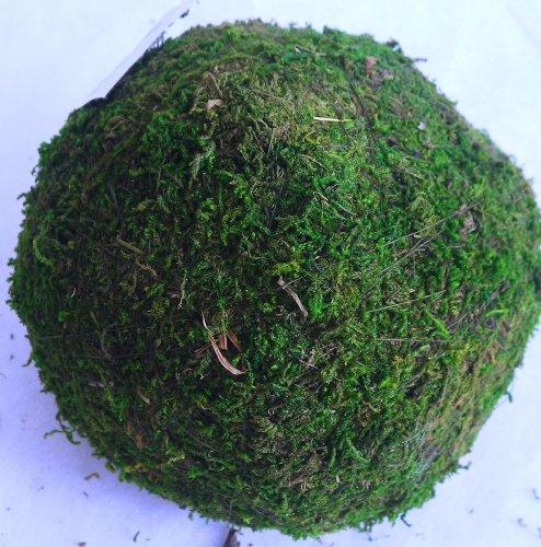 Mooskugel Moos Ball Ø 10 cm grün Deko