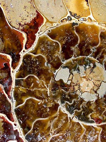 CALVENDO Puzzle Ammonit 2000 Teile Lege-Größe 67 x 90 cm Foto-Puzzle Bild von Dagmar Laimgruber