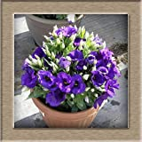 SwansGreen 6 : Hot Sale 7 Colors Available Eustoma Seeds Perennial Flowering Plants Plants Potted Flowers Seeds Lisianthus Seeds - 10 PCS