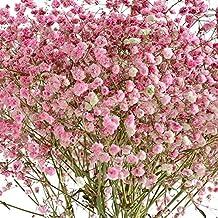Remeehi - Flores secas naturales de color morado y rosa, rosa y blanco, 6 unidades
