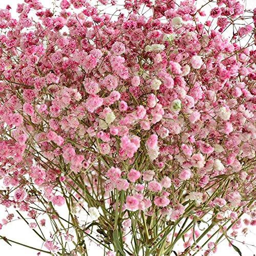 Flores secas naturales Remeehi, colores morado y rosa, rosa y blanco, 6 unidades