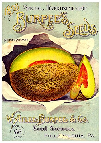 watlee-burpee-co-burpees-seeds-1893-a4-glossy-art-print-taken-from-a-beautifully-illustrated-vintage