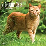 Ginger Cats - Rothaarige Katzen 2018 - 18-Monatskalender: Original BrownTrout-Kalender [Mehrsprachig] [Kalender] (Wall-Kalender)