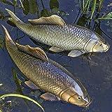 Gartendeko Schwimmtier Fisch Koi Karpfen L30cm - Preis pro 1 Stück
