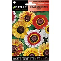 Semillas de Flores - Crisantemo Tricolor variado - Batlle