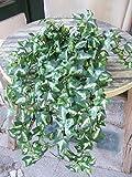 KünstlicheEfeuranke grün-weiß ca. 50cm, ca. 540 Blätter Top-Qualität