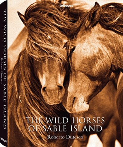 THE WILD HORSES OF SABLE ISLAN