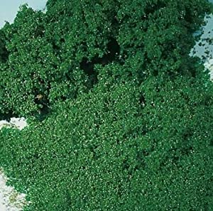 Auhagen 76981 follaje Verde Fina de Espuma de Musgo