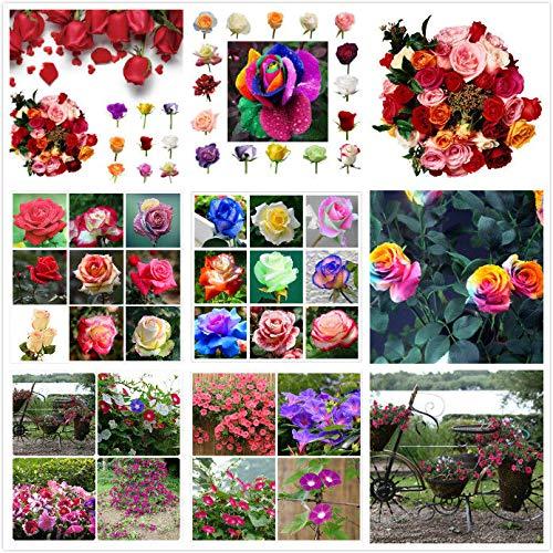 PLAT FIRM GERMINATIONSAMEN: Multi-color (200 stücke): 50 stück Farben Misch Clematis Kletterpflanzen Samen Blume Hausgarten Decor US LOT