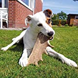 Damhirsch Geweihsnack Dogreform reines Naturprodukt 1St./Gr. XL = 125 – 160g - 5