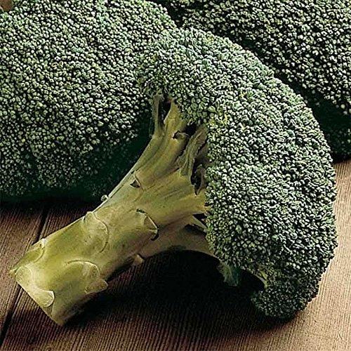plat firm semi di germinazione: 100 - graines: packman hybrides f1 nei broccoli cotti graines - sie können es die ganze !! wachsen saison mmmm.good !!!!
