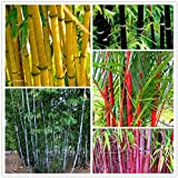 BEE Garden Bamboo Seeds Combo Pack (Pack Of 20 Seeds)