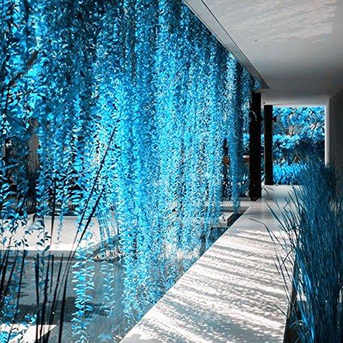 Inovey 100 Pcs/Sac Bleu Perle Chlorophytum Semences Plantes en Pot Fleurs pour Jardin Et Décoration Intérieure
