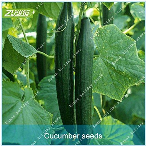 ZLKING 100 Pcs chinois long concombre Bonsai Graines Légumes de semences biologiques naturelles non OGM Nutritif peuvent être consommés directement