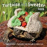Tortoise in a Sweater 2018