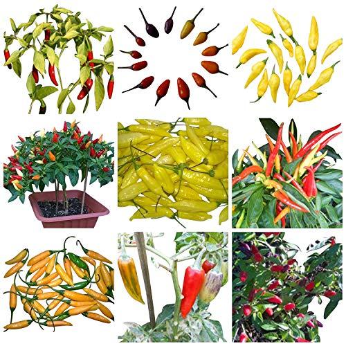 Bonsai/Mini Chili Sortiment 40 Samen / 4 Arten **Dekorative Chili-Bäumchen**