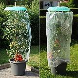 TOM-GARTEN Tomatenhut Starter-Set inklusive 1x Tomaten-Saatgut von TOM-GARTEN | idealer Schutz für Ihre Tomaten | einfacher Anbau, auch im Kübel | kleine, süße Tomaten