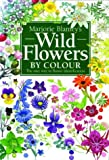 Wild Flowers by Colour: The Easy Way to Flower Identification