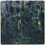 3drose LLC 8x 8x 0,25Zypressen Bromelien Big Cypress NP Florida Rolf Nussbaumer Mauspad (MP 84509_ 1)