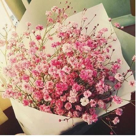 Coorun Gypsophila Blumen Samen Gypsophila Repens Teppich-Schleierkraut 30 Samen mehrfarbig (Rosa)
