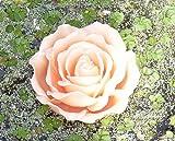 Schwimmkerze 'Rosenblüte' apricot 15 cm